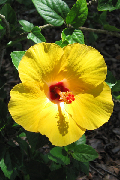 FL 23 Yellow Flower