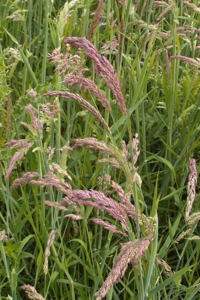 FL 149  Grass in Ellerbee SAM_9642