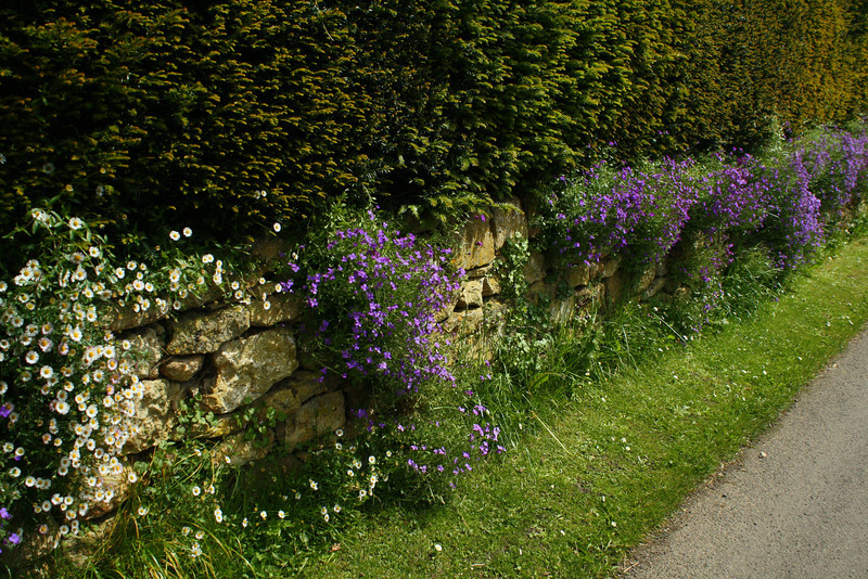 SC 250 Flowered Wall, England