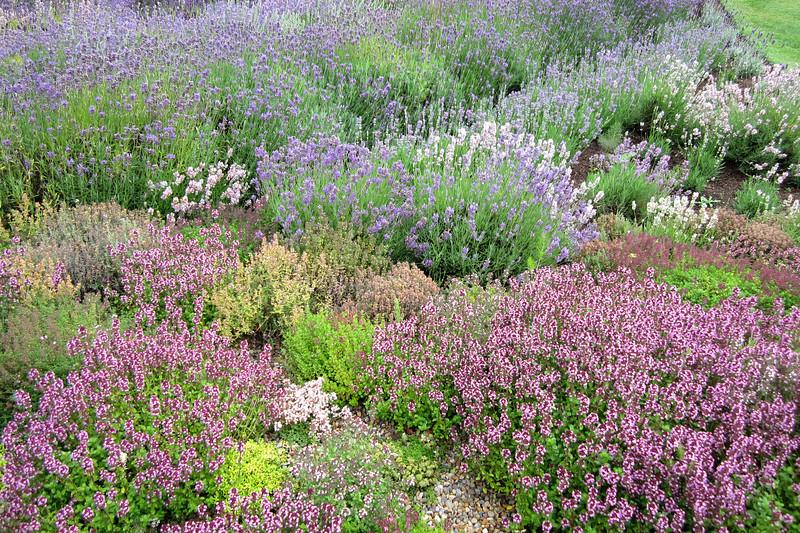FL 114 Lavender Fields