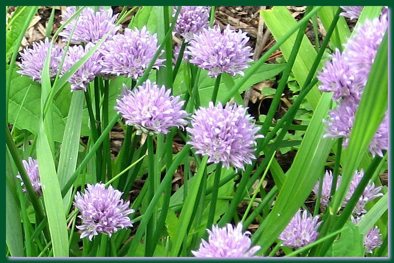 FL 38 Purple Wildflowers