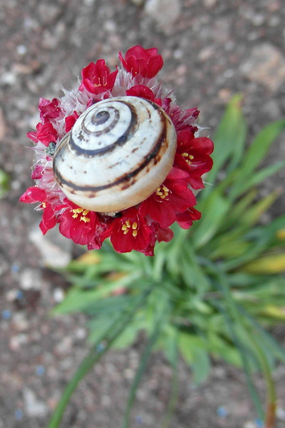 FL 137 Snail on Flower