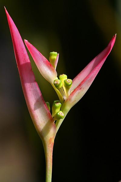 FL 75 Pink Flower