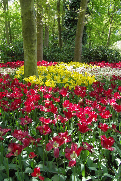 FL 117 Forest in Bloom, Holland