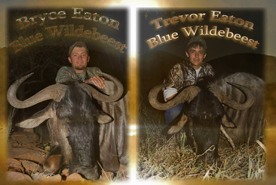 Bryce and trevor b wildebeest