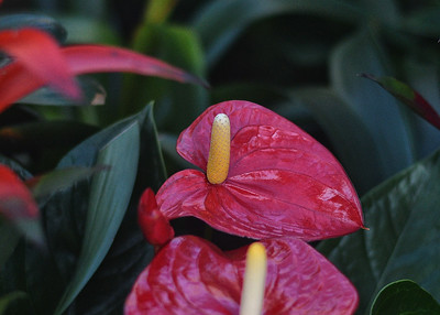 NEA_4342-7x5-Flower