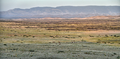 NEA_0466-Cattle