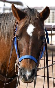 NEA_4040-Horse