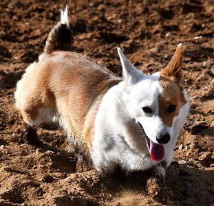 NEA_4044-Muddy Dog