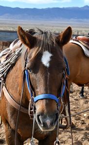 NEA_4038-Horse