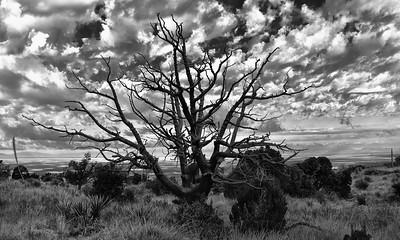 NEA_7827-Tree-B&W-Vr2