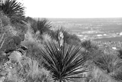 NEA_0035-Yucca-BW