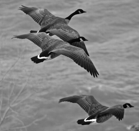 Flying Geese from Above