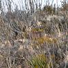NEA_8906-Deer