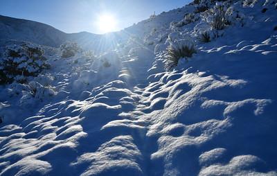 NEA_3660-Snowy Trail