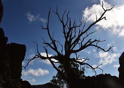 NEA_0968-7x5-Dead Tree