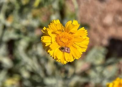 NEA_1030-7x5-Flower