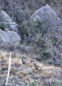 NEA_6866-5x7-Deer