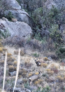 NEA_6863-5x7-Deer