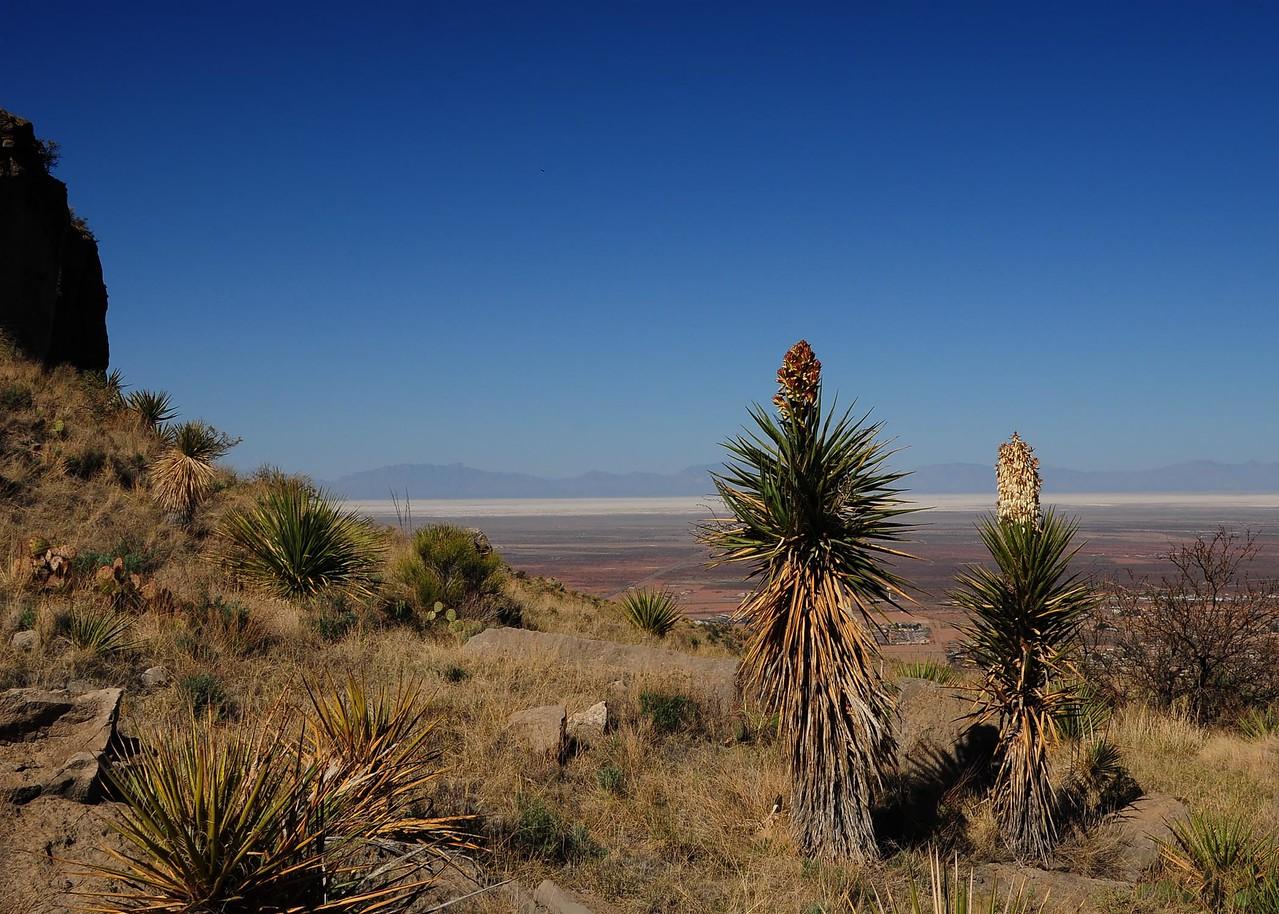 NEA_3147-7x5-Yucca