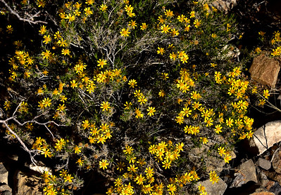 NEA_1170-Flowers