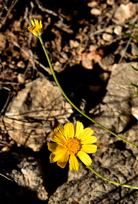 NEA_1155-Flower