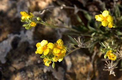 NEA_1151-Flowers
