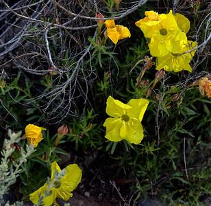 NEA_1166-Flowers