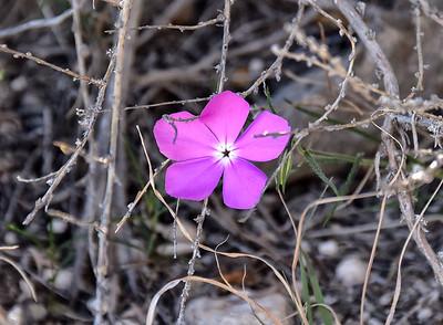 NEA_1150-Flower