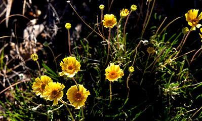 NEA_1153-Flowers