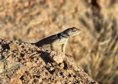 NEA_6255-7x5-Lizard