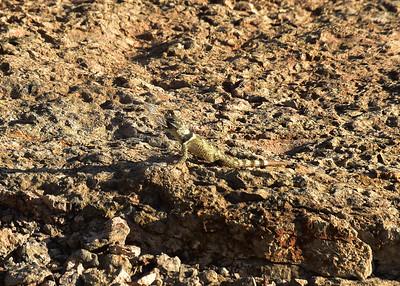 NEA_6253-7x5-Lizard w insect-V2