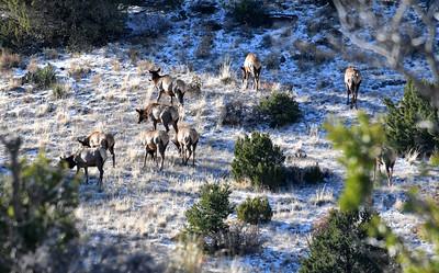 NEA_1692-Elk