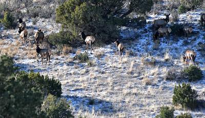 NEA_1695-Elk