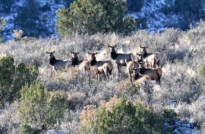 NEA_1702-Elk