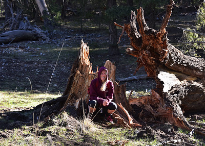 NEA_1112-7x5-Marie-Tree