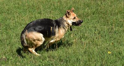 NEA_0412-Dog