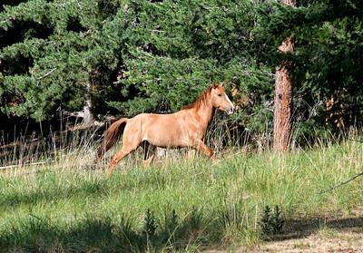 NEA_2281-Wild horse