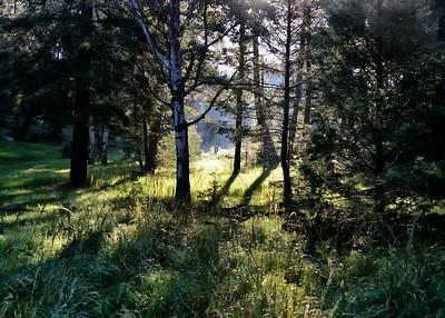 NIC_8463-7x5-Morning Light