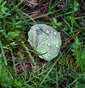 NEA_0136-raindrops
