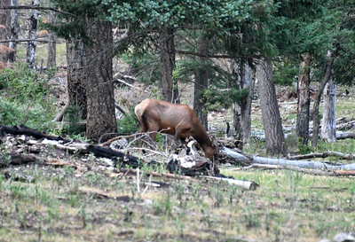NEA_2255-Elk
