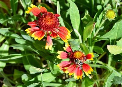 NEA_5524-7x5-Flower