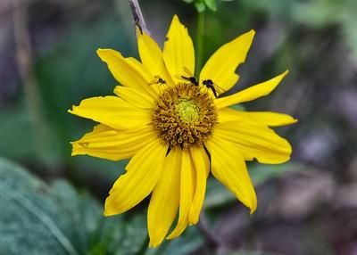 NEA_5528-7x5-Flower
