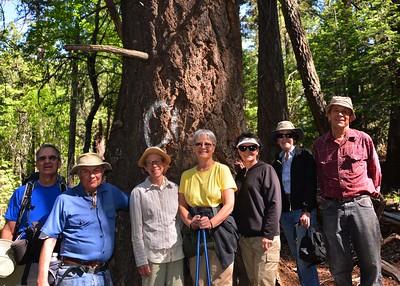 NEA_0053-7x5-Hikers-Old Growth