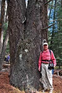 NEA_2167-4x6-Largest tree Lincoln