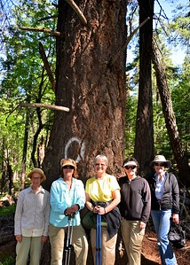 NEA_0051-5x7-Hikers-Old Growth