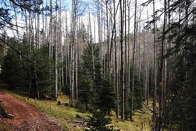 NEA_2169-6x4-Aspen Grove-Lincoln