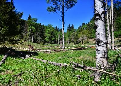 NEA_0098-7x5-Trail-T113