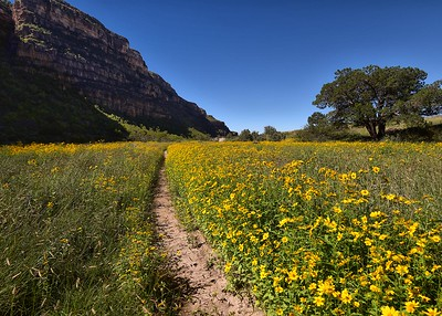 DSC_0078-7x5-Flowers-Dog Canyon