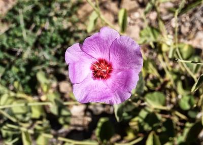 DSC_0087-7x5-Flower